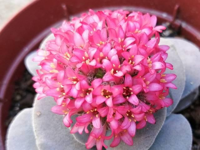 呂千絵の花